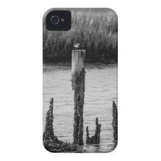 seagull sitting on a pole of rotted pier iPhone 4 case