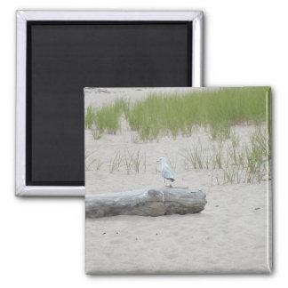 Seagull sitting on Log on Beach Photo Magnet