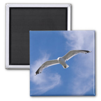 Seagull Square Magnet