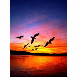 Seagull Sunset - Flying Gulls at Sunset Photo Cut Outs