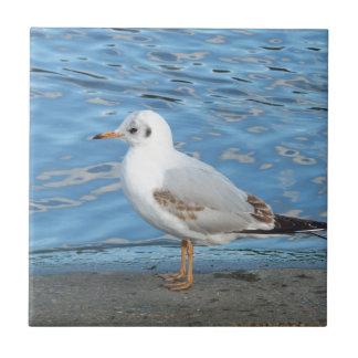Seagull Tile