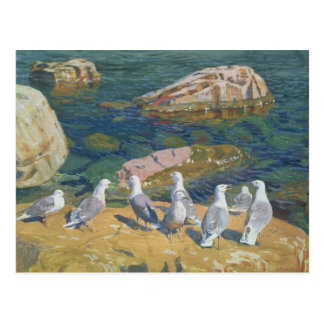 Seagulls, 1910 postcard