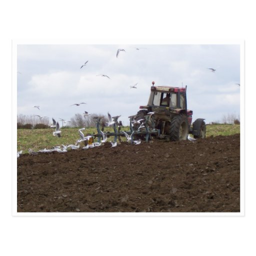 Seagulls and tractor post card