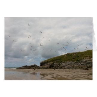 Seagulls at Porth Beach Newquay Cornwall Card
