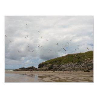 Seagulls at Porth Beach Newquay Cornwall Photo Print