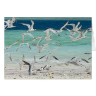 Seagulls Card