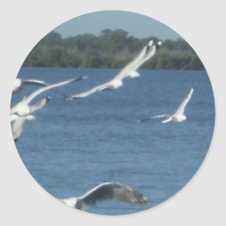 Seagulls in Flight Classic Round Sticker