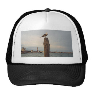 Seagulls in Italy Venice Cap