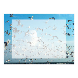 seagulls in sky over inlet birds card