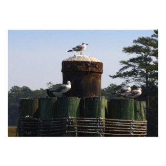 Seagulls Invite