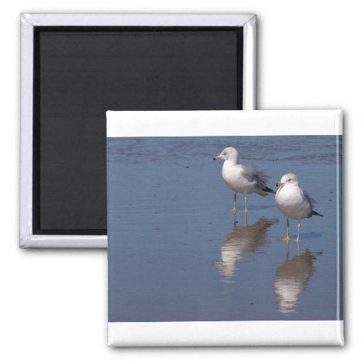 Seagulls Magnet