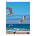 Seagulls mf posters