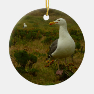 Seagulls on Anacapa Island (Channel Islands) Round Ceramic Decoration