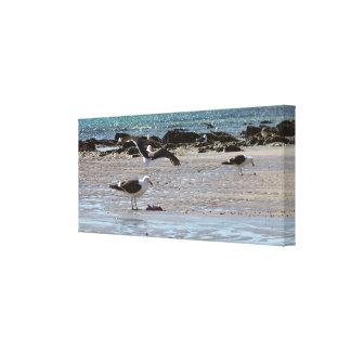 Seagulls on the seashore canvas print