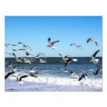 Seagulls Photo