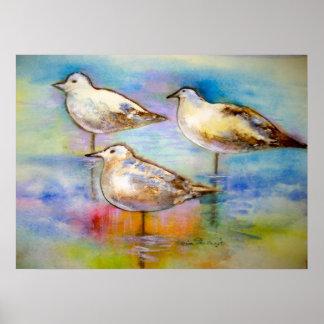 Seagulls - Poster