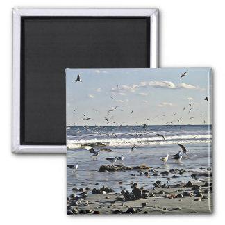 Seagulls & Shells Magnet