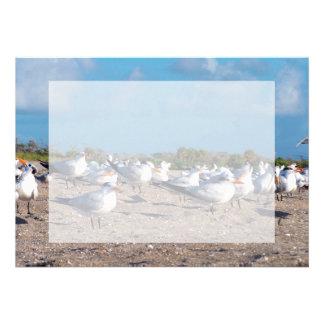 Seagulls standing on beach eye level announcements