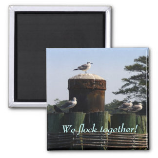 Seagulls - We Flock Together Square Magnet
