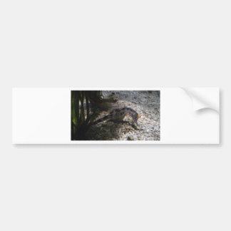 seahorse bumper sticker
