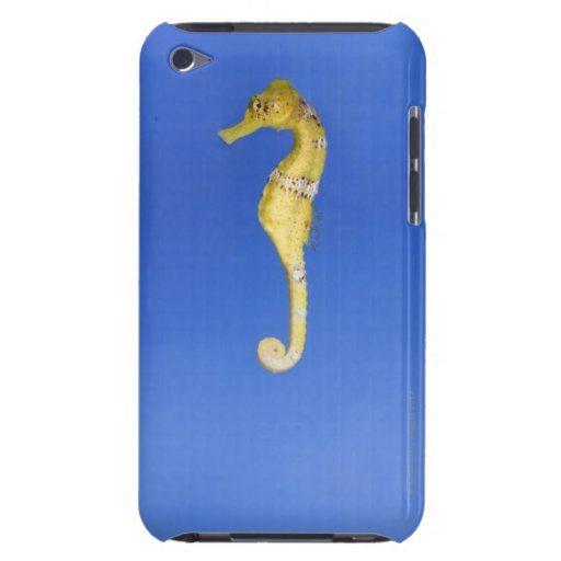 Seahorse iPod Touch Cases