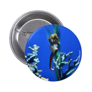 Seahorse Magic Pinback Buttons