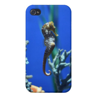 Seahorse Magic iPhone 4 Cover