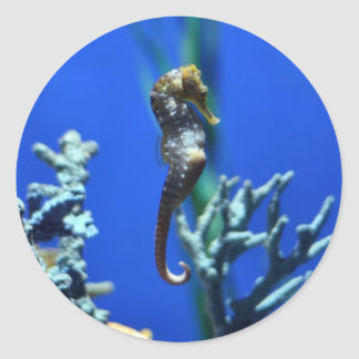 Seahorse Magic Round Sticker