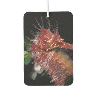 Seahorse   Pony Female Begur Car Air Freshener