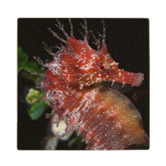 Seahorse | Pony Female Begur Wood Coaster