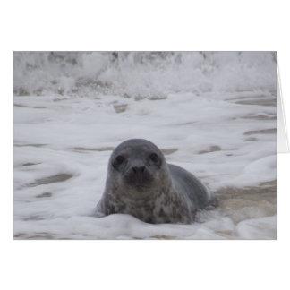 Seal - Animal Colour Photo Print Greeting Card