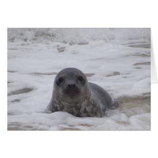 Seal - Animal Colour Photo Print Notecard