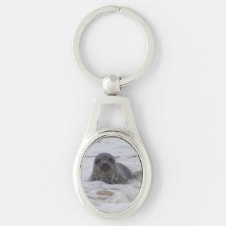 Seal - Animal Photo Image Oval Metal Keychain Keyring