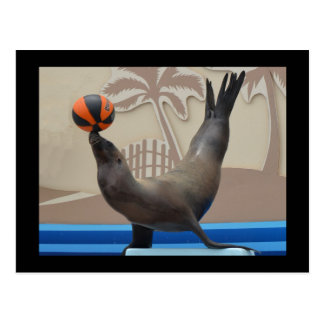 Seal (California Sea Lion) Postcard