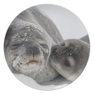 Seal family as plates