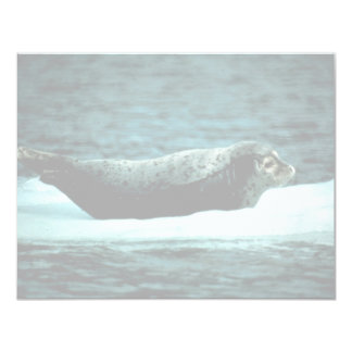 Seal Harbour 11 Cm X 14 Cm Invitation Card