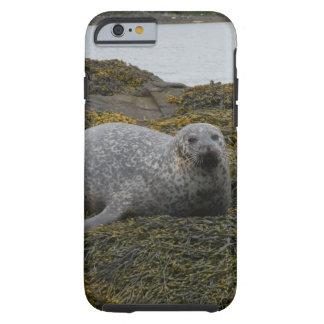 seal having a rest tough iPhone 6 case
