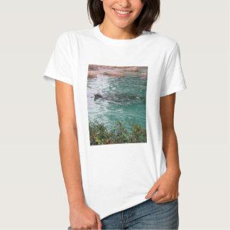Seal Head Peeks Shirt