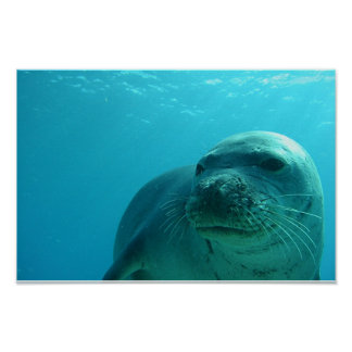 Seal in Blue Poster