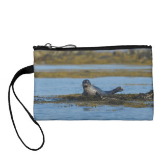 Seal in Casco Bay Maine Coin Wallets