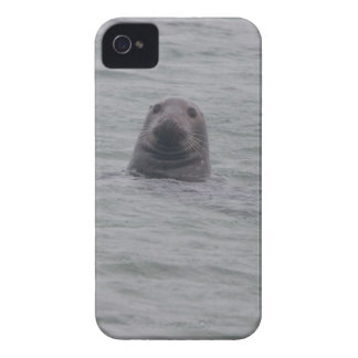 Seal iPhone 4 case iPhone 4 Covers