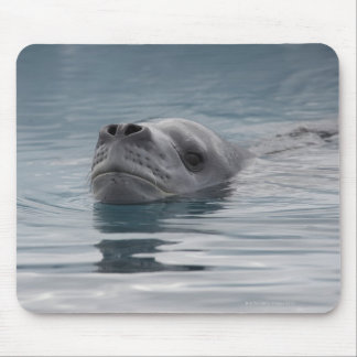 seal leopard which swims mouse pad
