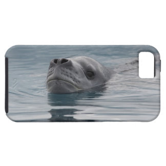 seal leopard which swims tough iPhone 5 case
