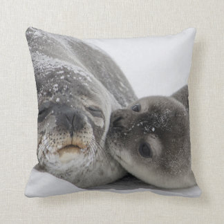 Seal mother with young cushion