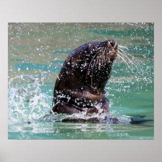 Seal Poster