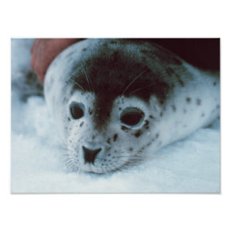 Seal Posters