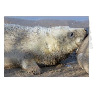 Seal pup card