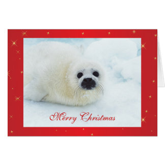 Seal pup cute baby in snow holiday christmas card