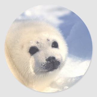Seal Pup Face Round Sticker