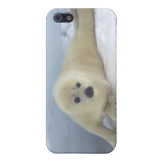 Seal Pup iPhone 5 Cover